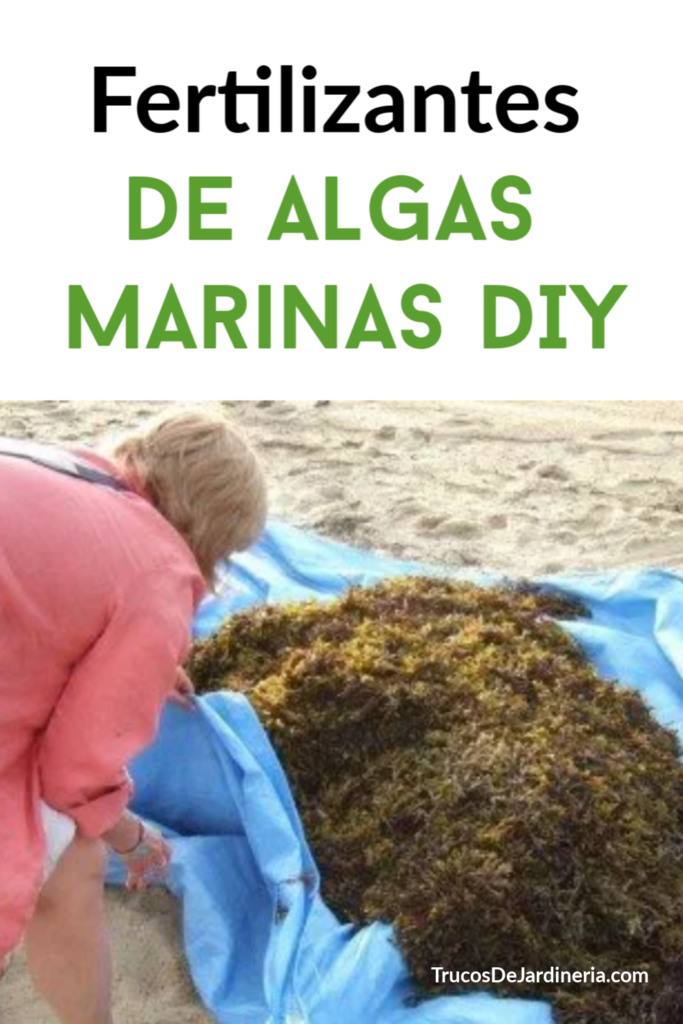Fertilizantes de Algas Marinas DIY