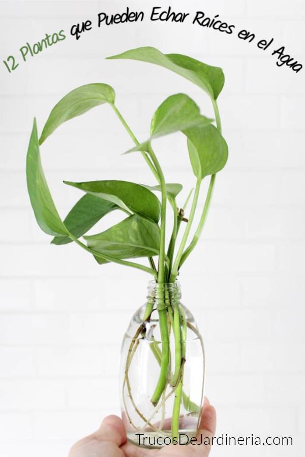 Plantas que Crecen en el Agua