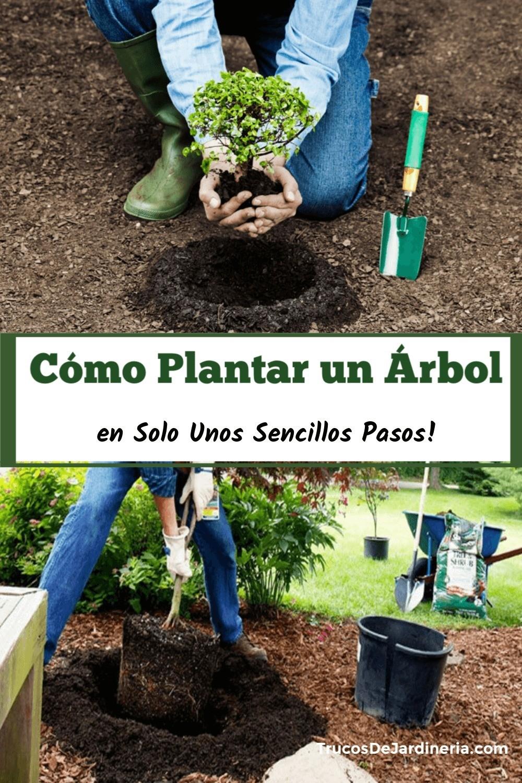 En este tutorial, le mostraremos cómo plantar un árbol. Si bien puede parecer fácil, hay algunos factores involucrados, como el tipo de árbol, el clima y la separación previa.