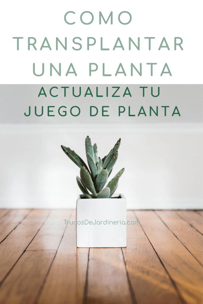 Cómo trasplantar una planta