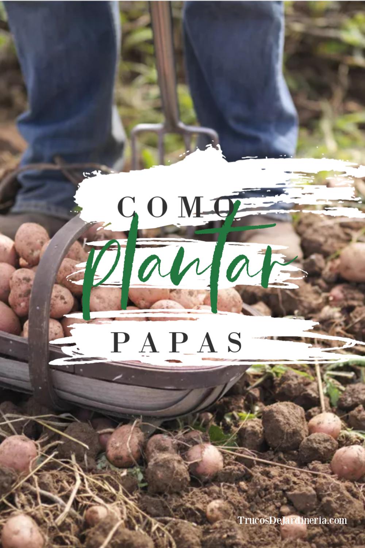 ¡Aprende a cómo plantar papas con esta guía de jardinería fácil de seguir! ¡Cultivar y plantar papas es mucho más fácil de lo que piensas!
