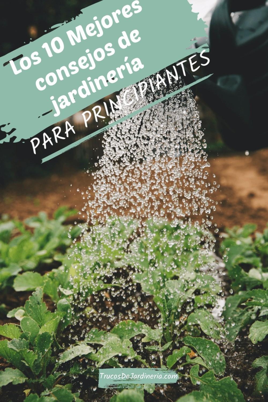 10 Mejores Consejos de Jardinería para Principiantes