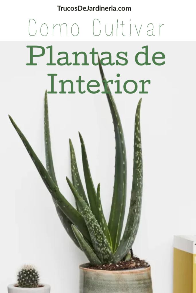 Cómo Cultivar Plantas de Interior