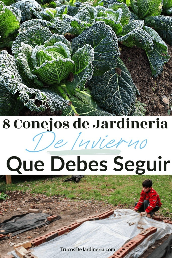 Consejos de Jardinería de Invierno