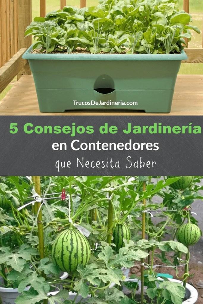 Consejos de jardinería en contenedores