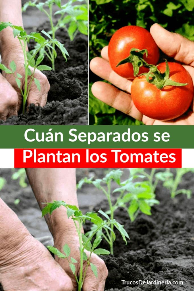 Cuán Separados se Plantan los Tomates