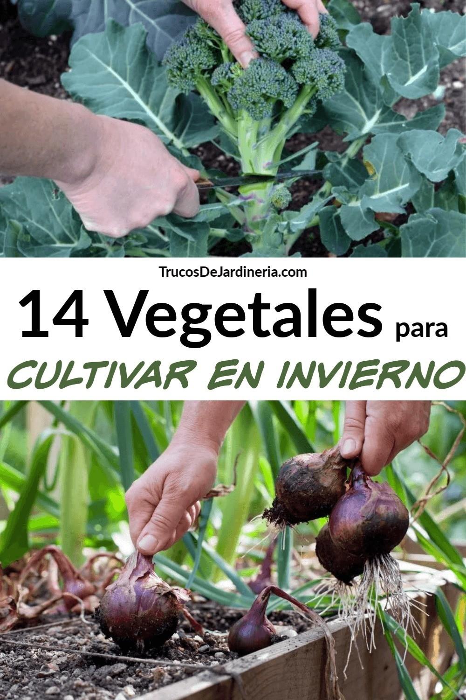 Vegetales para Cultivar en Invierno