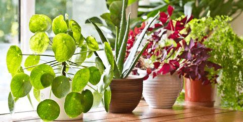 como cultivar plantas de interior
