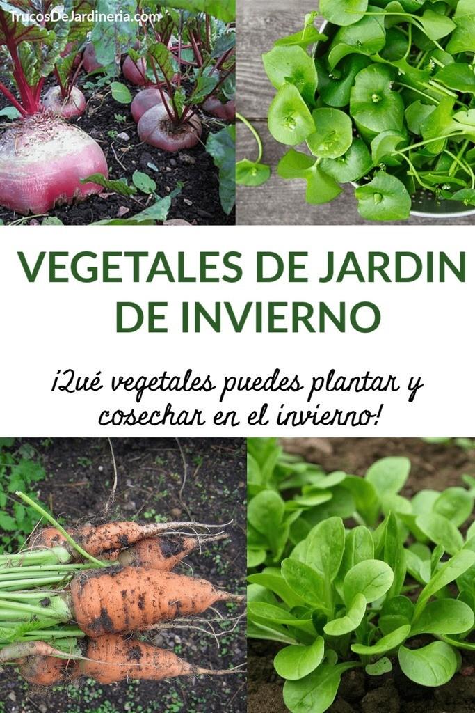 Vegetales de Jardin de Invierno