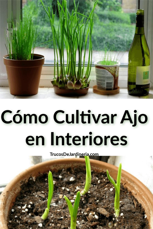 Cómo Cultivar Ajo en Interiores